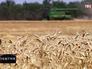 Сельскохозяйственные работы в Крыму