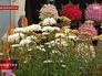 Цветочная выствка в Лондоне