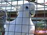 Попугай в питомнике