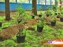 Озеленение сквера
