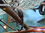 Обезьяны в Московском зоопарке