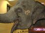 Слон в вольере цирка