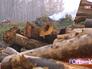 Сожженные деревья