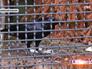 Ворон в Московском зоопарке