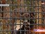 Харек в Московском зоопарке