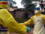 Вирус лихорадки Эбола
