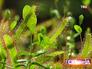 Выставка плотоядных растений
