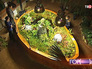 Выставка плотоядных растений в Аптекарском огороде