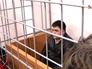 """Главный арендатор сгоревшего ТЦ """"Адмирал"""" в Казани Гусейн Гахраманов"""