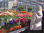 Цвететочная теплица в Аптекарском огороде