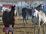 Лошади в вольере