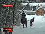 Новый вид спорта - скиджоринг