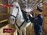 Полицейский одевает на лошадь седло