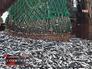 Отгрузка пойманной рыбы с траулера