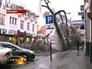 Поваленное дерево в Краснодаре