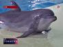 Сочинский дельфин