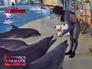 Тренер учит рисовать дельфинов