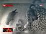 Переднеазиатский леопард. Кадр из видеонаблюдения
