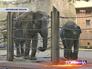 Слоны московского зоопарка