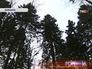 Лес в Балашихе