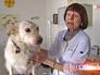 Ветеринарный врач осматривает собаку