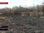 Последствия лесных пожаров в Амурской области