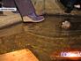Затопленный подвал жилого дома
