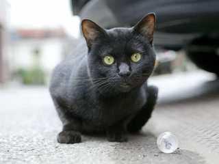 Кто боится... Кто боится... Ведьминого кота