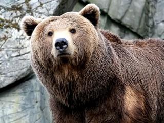 Кто боится... Кто боится... Трёх медведей. Серия 1