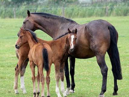 Наши любимые животные. Эфир от 11.11.2012