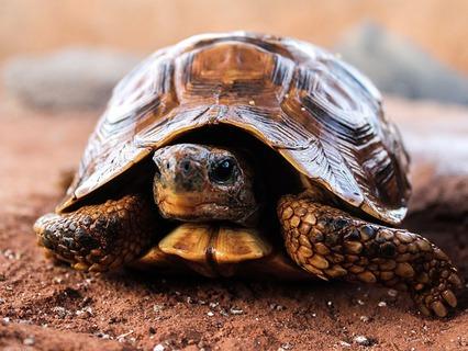 Наши любимые животные. Эфир от 21.10.2012
