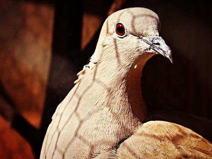 Наши любимые животные. Эфир от 23.09.2012