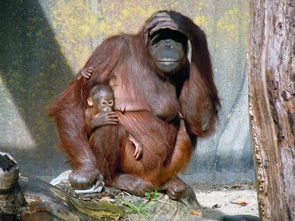 Наши любимые животные. Эфир от 01.07.2012