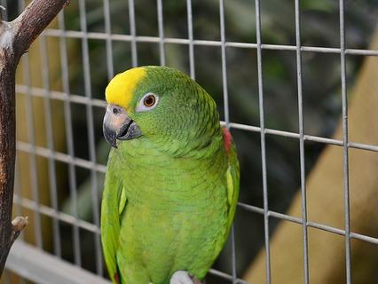 Наши любимые животные. Эфир от 18.03.2012