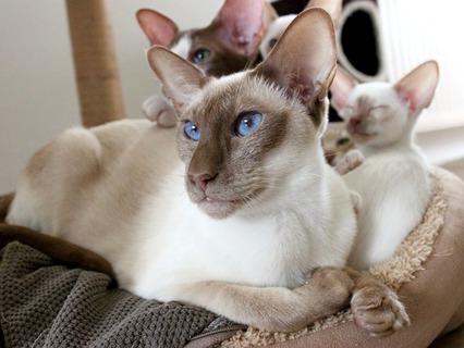 Наши любимые животные. Эфир от 25.12.2011