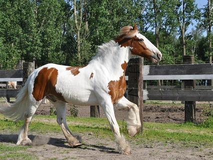 Наши любимые животные. Эфир от 11.12.2011