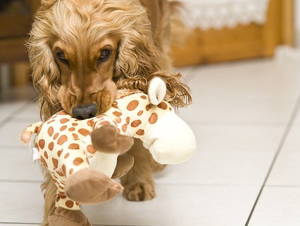 Наши любимые животные. Эфир от 23.10.2011