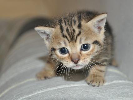 Наши любимые животные. Эфир от 24.07.2011