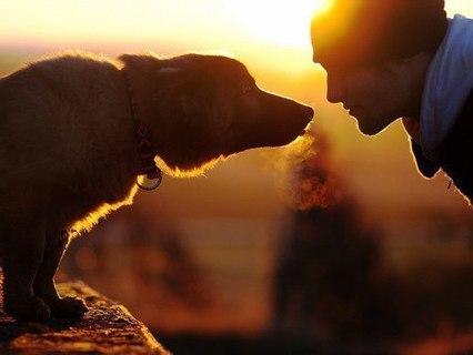 Наши любимые животные. Анонс. Эфир от 12.12.2014