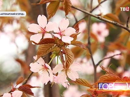"""""""Город новостей"""". Эфир от 30.04.2015 19:30"""