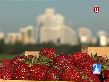 ГОРОД НОВОСТЕЙ Эфир от 21.06.2013