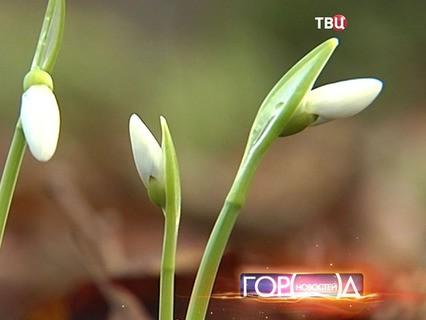 """""""Город новостей"""". Эфир от 24.12.2015 17:30"""