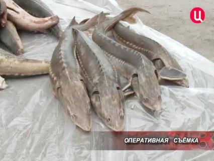 Петровка, 38. Эфир от 19.07.2013
