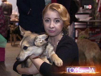 """""""Город новостей"""". Эфир от 21.03.2016 17:30"""