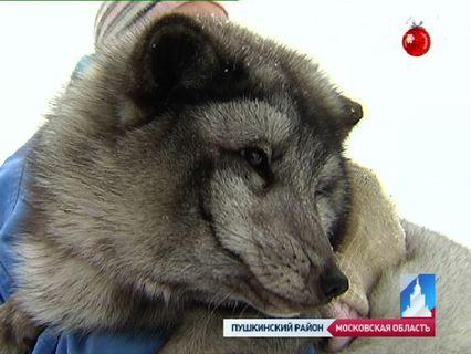 ГОРОД НОВОСТЕЙ Эфир от 09.01.2013