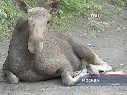 """""""Петровка, 38"""". Эфир от 04.07.2016 21:45"""