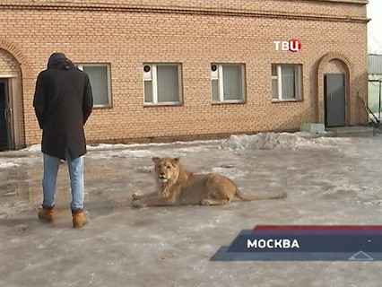 """""""Петровка, 38"""". Эфир от 28.02.2017 20:00"""