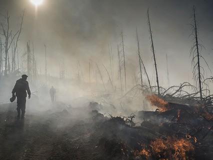 Последствия лесных природных пожаров