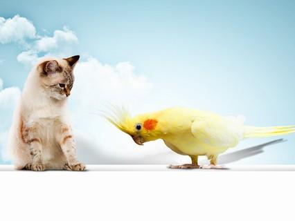 """Наши любимые животные. """"Уроки пернатого лингвиста"""""""