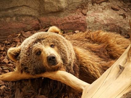 """Наши любимые животные. """"Медвежья жизнь"""""""